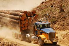 Fleet management for forestry assets